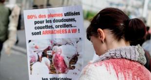 Marche «Laissons leur peau aux animaux»