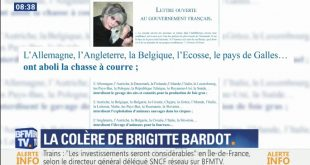 article-wp-fourrure-BB-macron-bfm