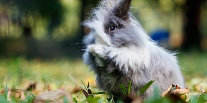 Burberry renonce à utiliser de la fourrure et de l'angora dans ses prochaines collections